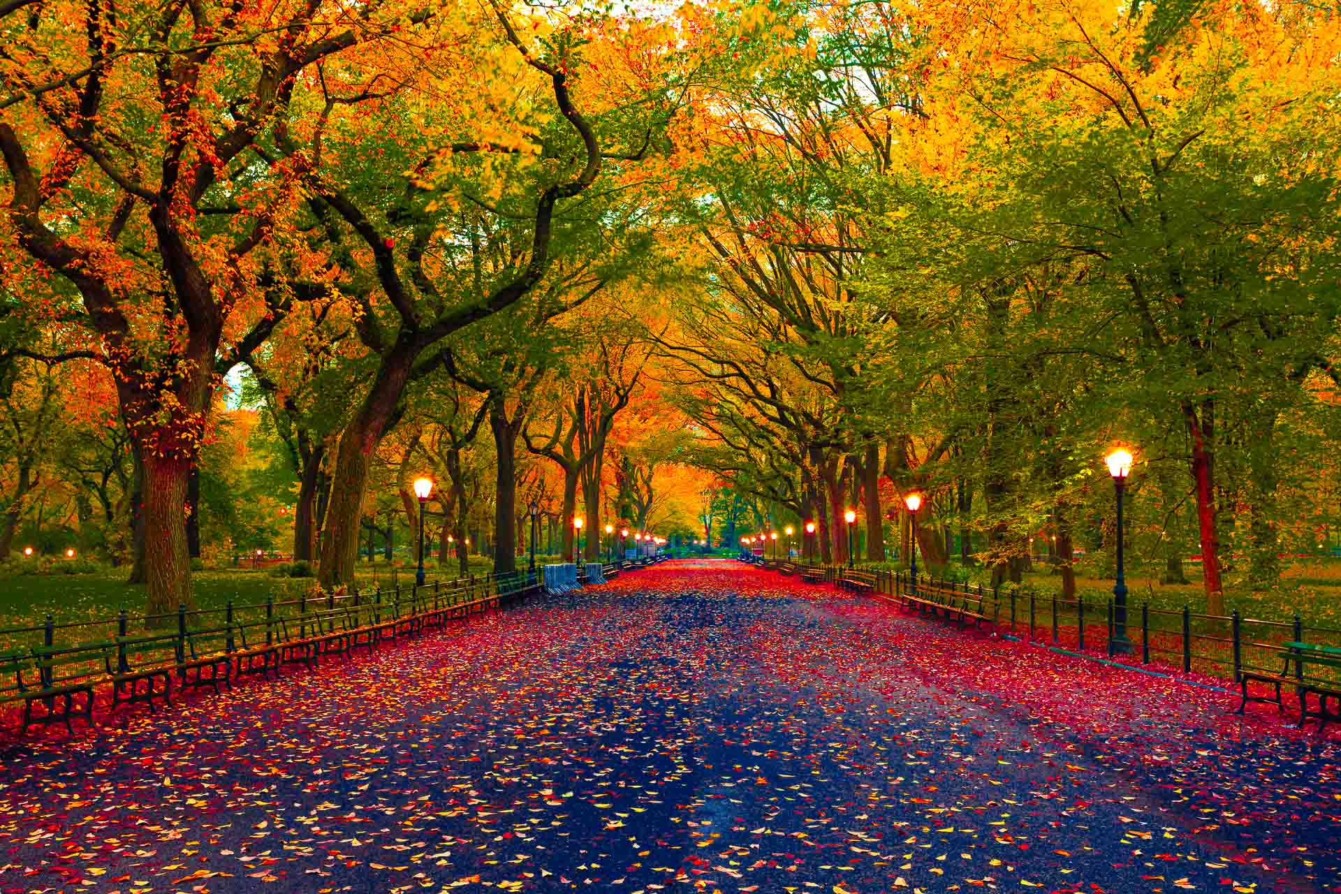 Fall leaves on a pathway in New York City's Central Park